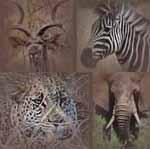 Safari Reisen für Senioren zum Krüger Nationalpark und nach Pilanesberg Südafrika Safari für Senioren