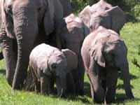 Südafrika - Elefanten im Addo - Fotos und Reisebericht