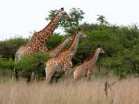 Südafrika - Midlands KwaZulu Natal  - Reiten und Safari - Fotos und Reisebericht