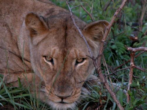 Südafrika, KwaZulu Natal, Safari, Hluhluwe und Umfolozi, St. Lucia und  Sodwana